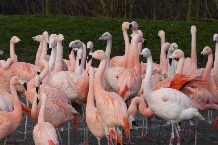 Winter warmers for the flamingos